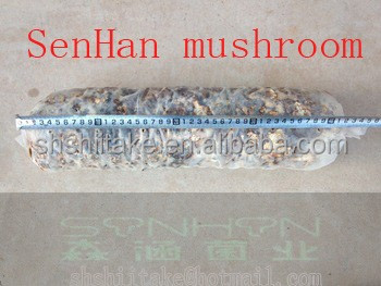 china base wholesale/ be authorized for dispatch/job cultivating fresh mushroom xiang gu spawn Shiitake Mushroom Growing bags