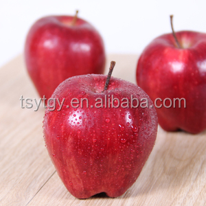 Top apple fruit price market price fresh red delicious apple