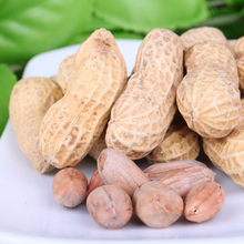 Export famous brand bulk good price shelled raw groudnut peanut in China