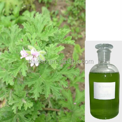 100% pure natural rose geranium oil for exporting