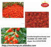 Factory supply goji friut/ gojiberry