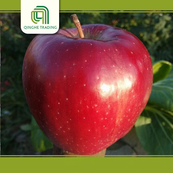 wholesale name of imported fruits red star apple with low price