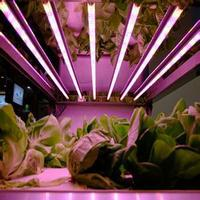 full spectrums 380nm-830nm t8 led grow tube