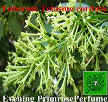 Strong evening primrose fragrance flower aroma for tissue paper/detergent /shampoo/shower/car fresh /lipstick /candle