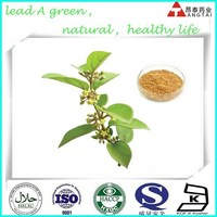 natural plant extract Gymnema sylvestre 75%, Ginseng Panax root extract 20%