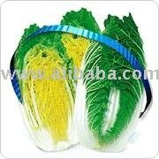 Vegetable seed>>new mini spring cabbage