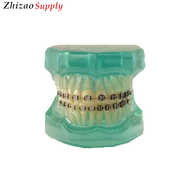 28pcs teeth orthodontic dental <strong>model</strong> with half metal&half ceramic bracket