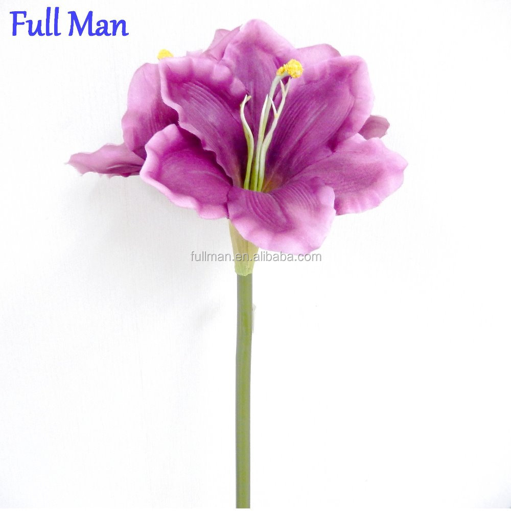 Pink Amaryllis Flower Pink Amaryllis Flower Suppliers And