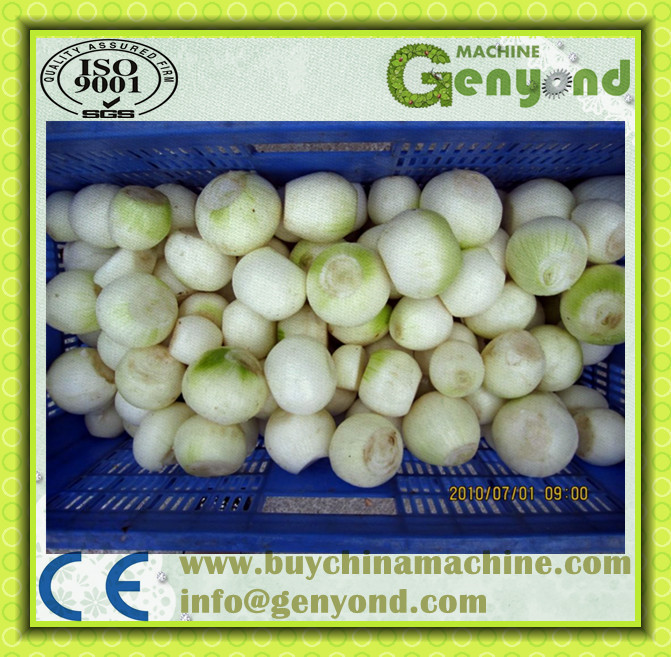 high efficiency onion root cutting machine onion skin removing machine with competitive price