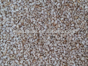 Chinese new crop whitish sesame seeds, white sesame seeds ,sortex