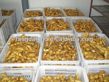 China nature fresh ginger 200g up price