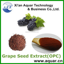 Vitis Vinifera extract, grape seed extract 95%, Proanthocyanidins, OPC
