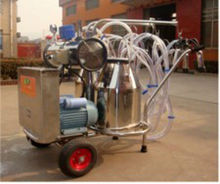 two cows vacuum milking machine