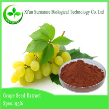 Free sample grape seed extract cream with opc 95%
