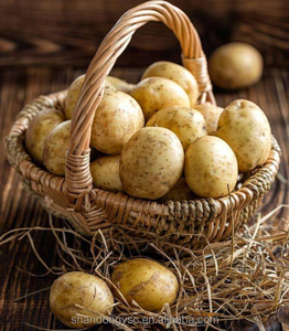 cheap price large fresh potato for russian importers of potato