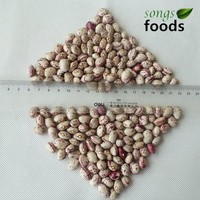 Chinese Xinjiang Origin Round Shape Light Speckled Kidney Beans
