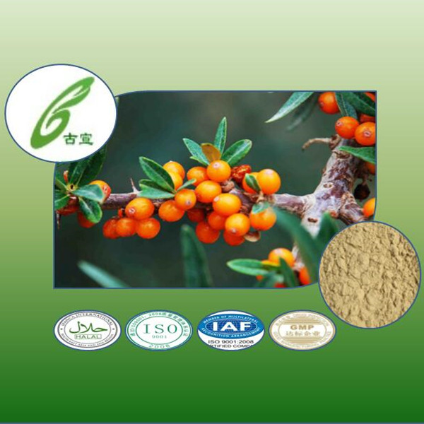 natural herb fructus Hippophae rhamnoides/sea buckthorn/seaberry extract to provide external treatment of plant extracts