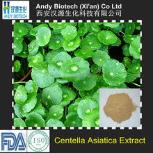Hot Selling Total Triterpenes 10% Centella Asiatica Extract Powder