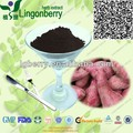 GMP Manufacturer Sweet potato Extract / sweet potato powder /anthocyanin 5%~25% UV