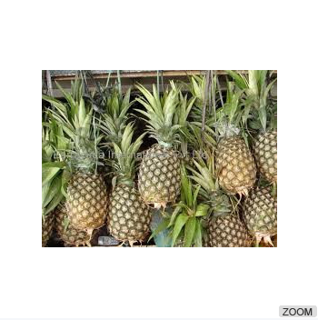 Suvimie Fresh Sri Lankan Pineapples