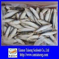 Frozen Canned Sardines Fish
