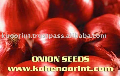 Onion Seeds Exporter: Kohinoor International PK