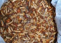 New crop brined nameko market prices in 50kg drum for mushroom