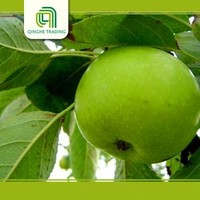 fresh green qinguan apples with CE certificate