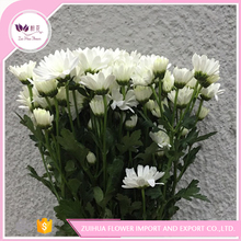 Wholesale flower chrysanthemums funeral flowers with best quality and low price