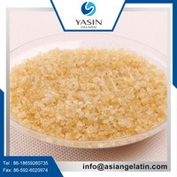 Light Yellow Color Halal Gelatin Cow Powder