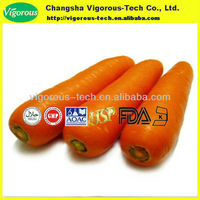 Organic pure carrot root extract powder