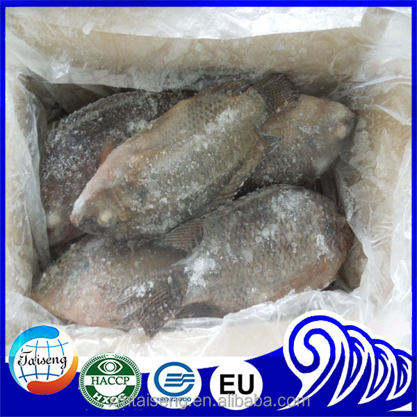 frozen wholesale tilapia price