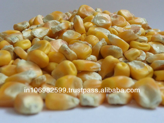 Yellow Maize - chicken feed for sale corn