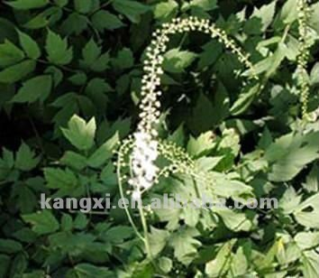 Black Cohosh extract powder --2.5%, 8% Actein