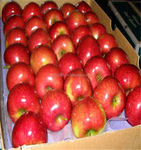 2015 good price red star apple supplier in china