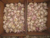 Whole Garlic Price of 2016 from China ( red garlic, white garlic)