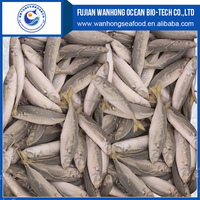 Fresh Frozen Horse Mackerel Fish/whole round big eye scad
