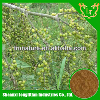 Green and Natural olive seed extract with High quality and good service