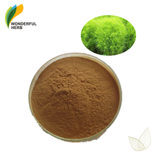 Factory supply broom cypress fruit extract Natural Fructus Kochiae