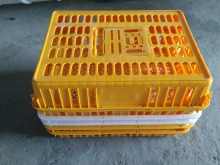 Plastic Live Chicken Cage for Poultry Farm