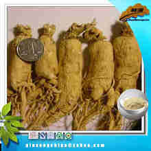 Hot sales ginseng seeds for sale