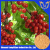Factory Supply High Quality Acerola Cherry Extract with 25% vitamin C