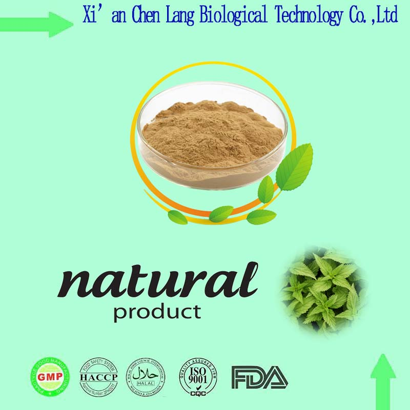 Oline Shopping Herbal Product Plant Dried Nettle Root Extract