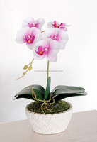 JY white mini pot orchid flower bedroom decorating