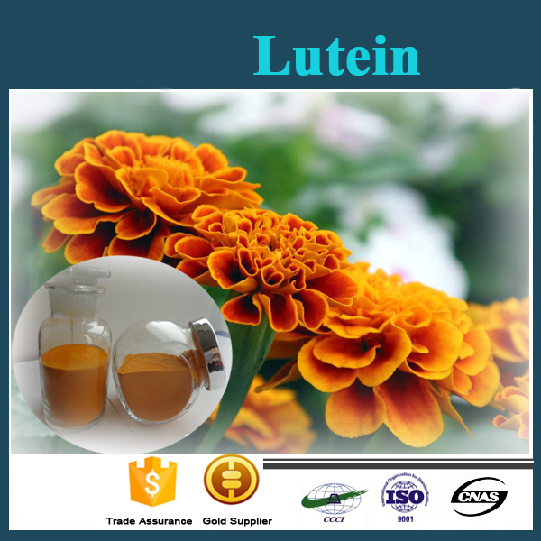 Factory Price Best Quality Marigold Extract 95% Purity Lutein Powder