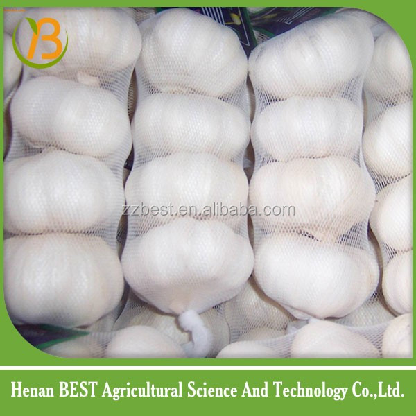 fresh natural Jinxiang garlic exporters