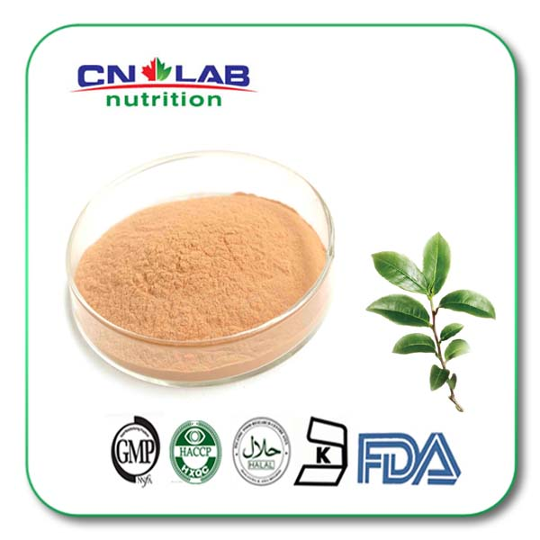 ISO factory supply green tea extract weight loss / green tea fat burner extract powder or tablets