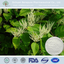 Functional food products CAS 501-36-0 Stilbenetriol Trans Kontiki bamboo RESVERATROL POWDER EXT. 8%