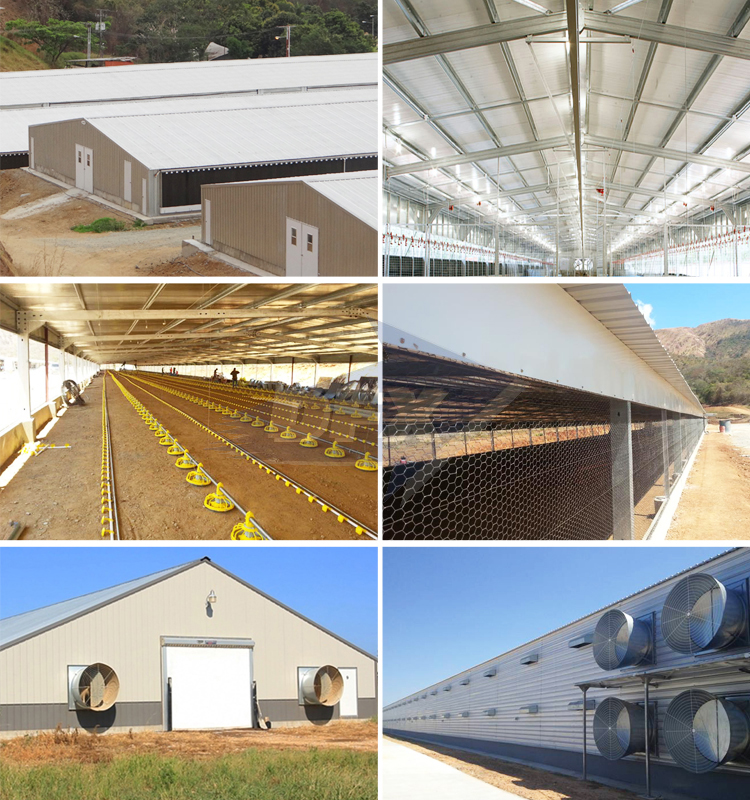 Complete prefabricated steel structure broiler poultry farm house shed design
