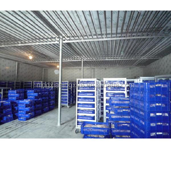 Refrigerated Warehouses with pu sandwich panel and germany bitzer condensing unit